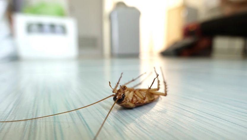 Bye Bye Bugs: 5 Disgusting Household Bugs and How to Get Rid of Them for Good