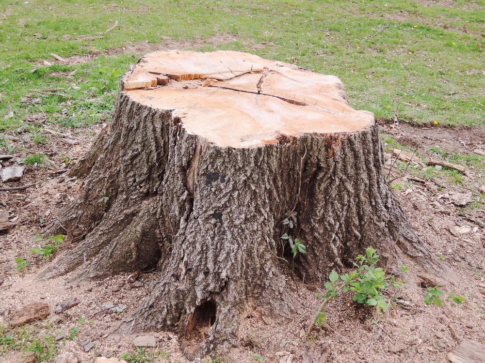 Stump It Out: 5 Reasons You Need to Remove Tree Stumps