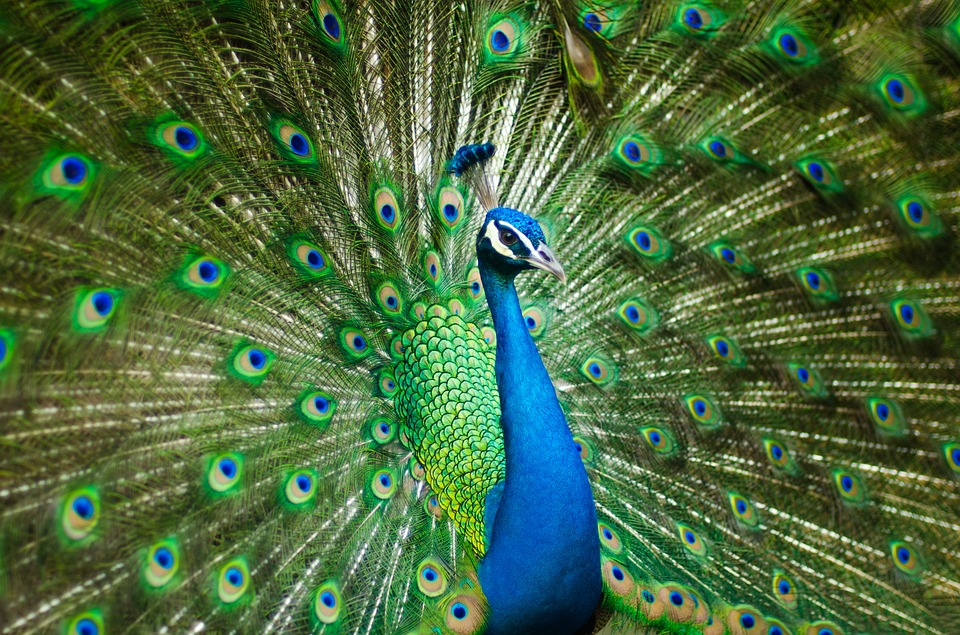 What Do The Feathers Say About Your Future?