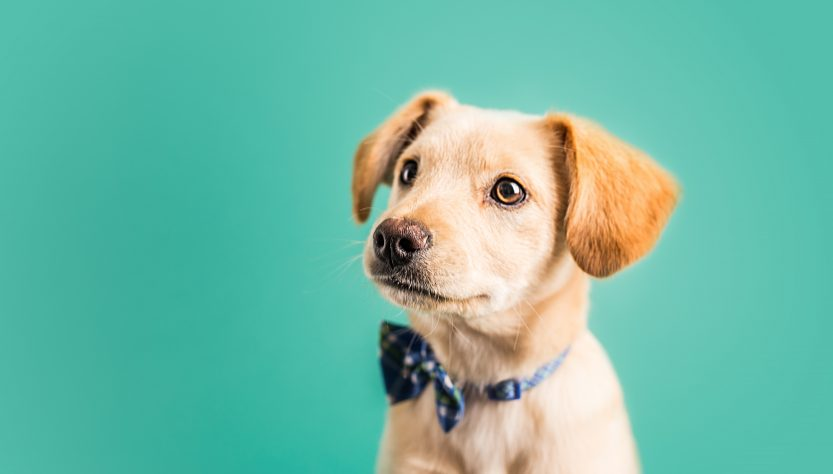 Have You Insured Your New Puppy Yet? What Does Pet Insurance Cover and Why Needs It?