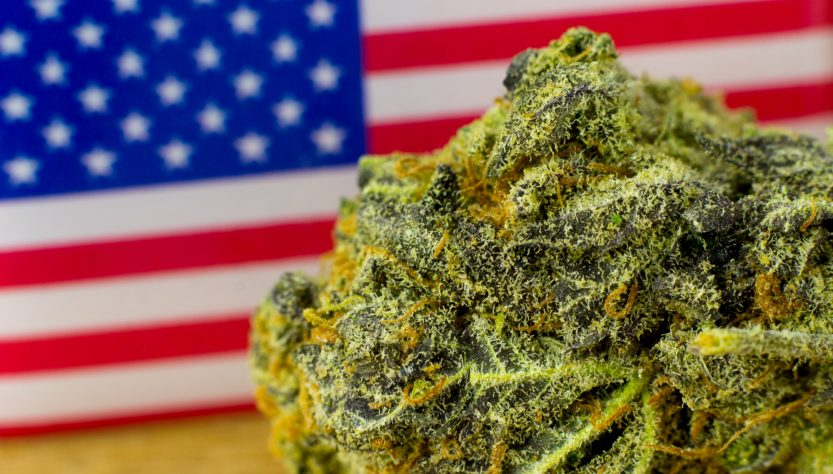The Origin of the Bud: A History of Marijuana in the US