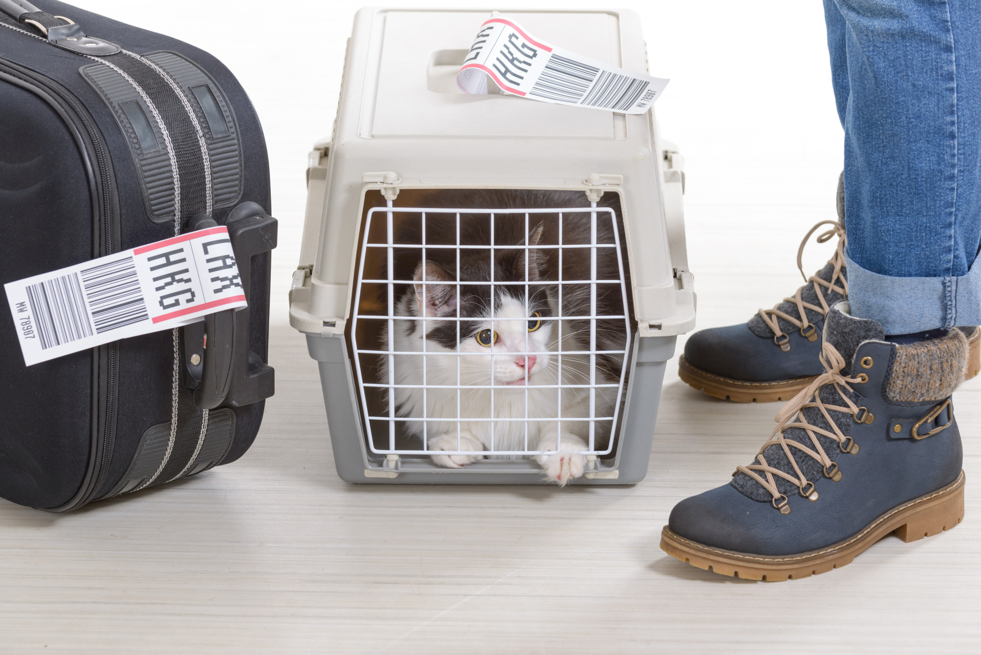 7 Essential Tips for Flying with Your Cat