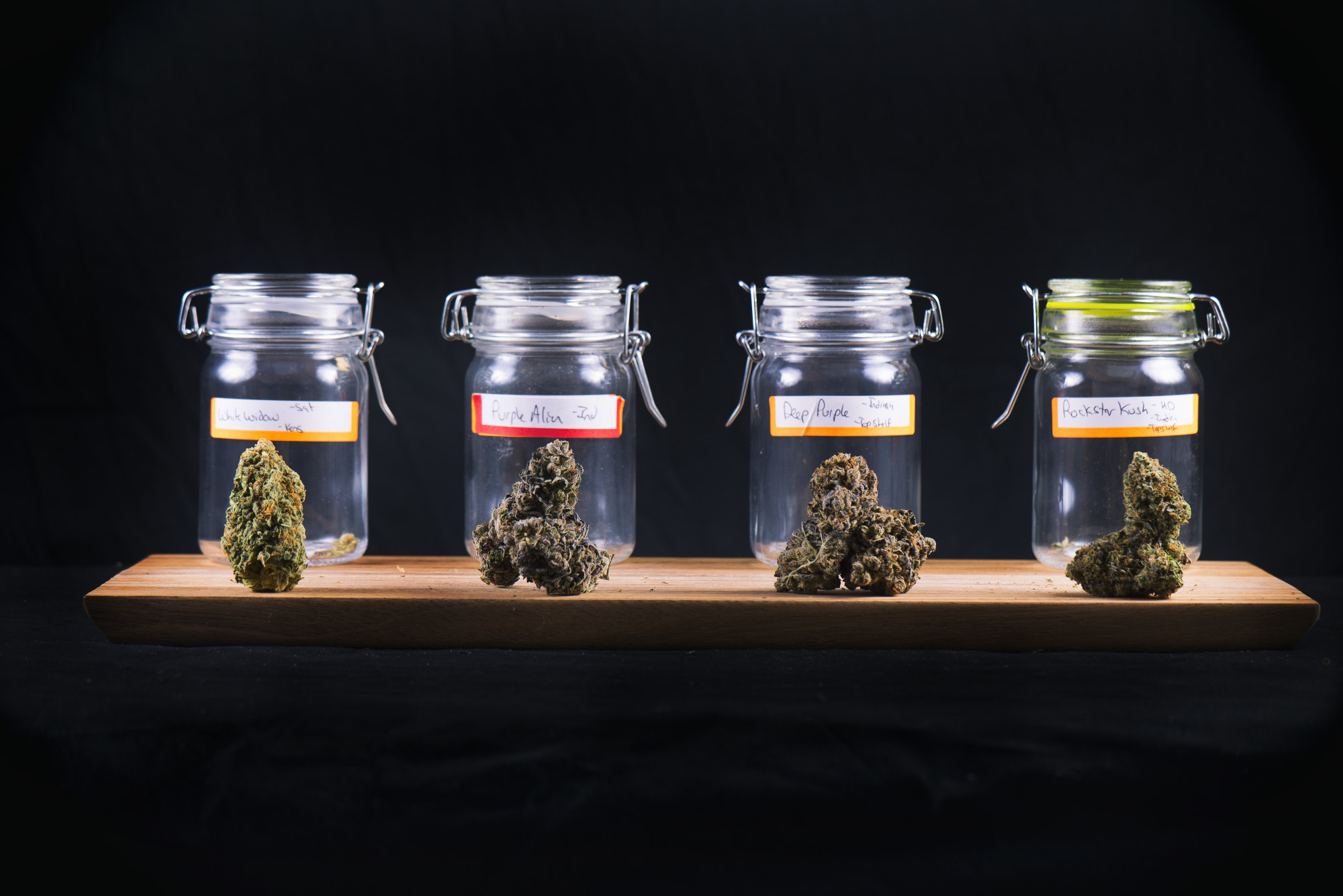 Sativa Selector, Indica Indicator: Your Premier Marijuana Strain Guide