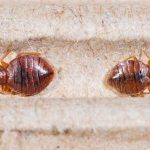 6 Effective Bed Bug Prevention Tips