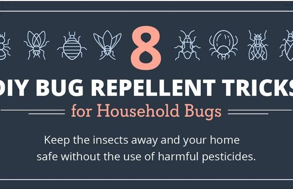 6 Summer Bugs and How to Remove Them from the Indoors