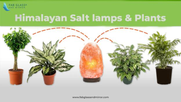 What is the Healthier Option for Home Interior: Salt Lamps or Plants?