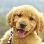 Grooming for the First Time? What You Need to Know for Your Puppy