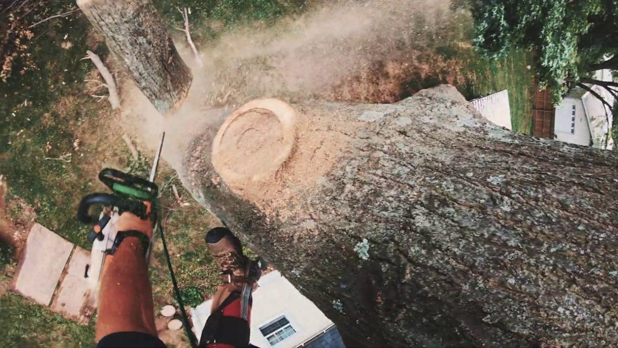 tree solutions company