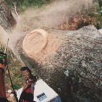 Inspecting for Storm Damage – Tree Removal in Sydney