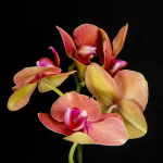 10 Wonderful & Gorgeous Orchids for Your Home Garden