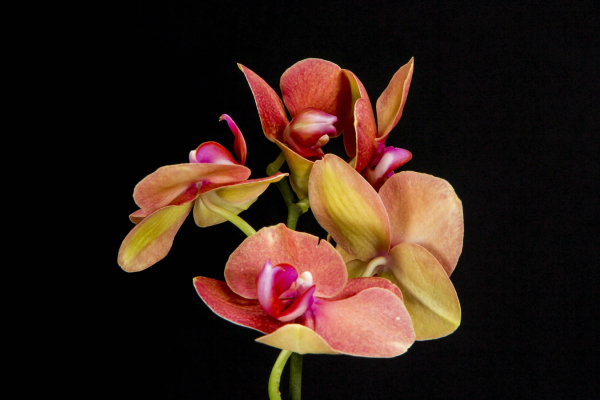 Gorgeous Orchids for Your Home Garden