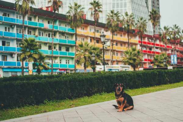 Pets in Pet Hotels